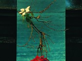Wprowadzenie w tyniecką ikebanę – II