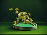 Wprowadzenie w tyniecką ikebanę
