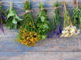 Tajemnice ziół – zioła w ogrodzie przydomowym